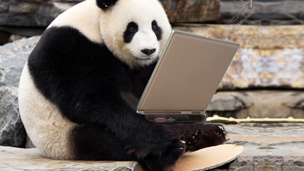 02082012_panda_laptop_article