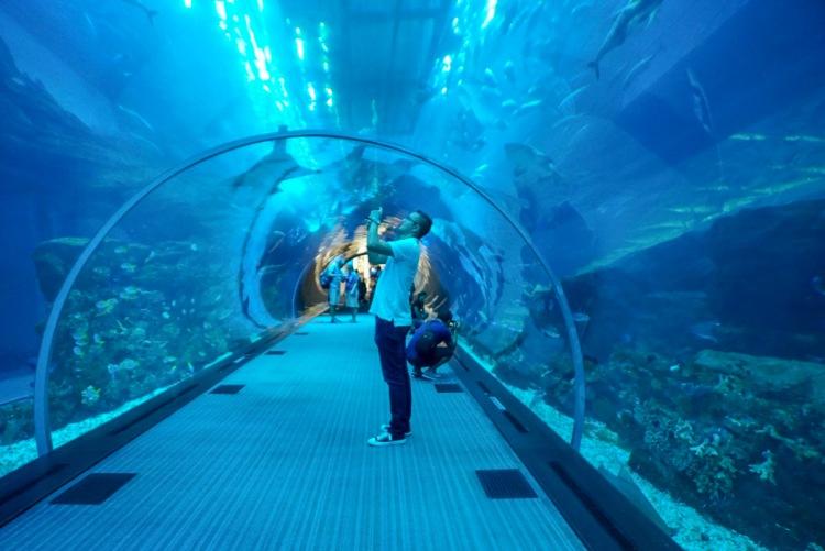 Dubai Mall Aquarium 1