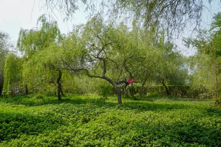 green park sharjah